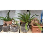 Concrete/Terracotta Pots and Plants - Lot of 14