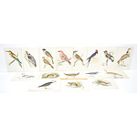 Group of Antiquarian Coloured Engravings Including, Bee-Eater, Peregrine and Shore Lark