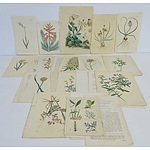 Group of Antiquarian Flora Colour Engravings, Including Published by S Curtis, D Woodville and More