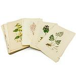 Group of Antiquarian Flora Colour Engravings and Descriptions