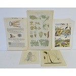 Antiquarian Hand Coloured Flora and Fauna Engravings