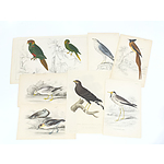 Group of Antiquarian Hand Coloured Ornithological Engravings, Including Lizars and C Hamilton Smith