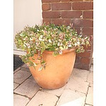 Tapered Terracotta Planter with Succulent