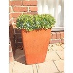 Glazed Square Tapered Planter with Succulent