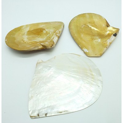Three Large Polished Australian Oyster Shells
