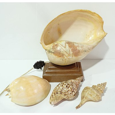 Retro Shell Lamp with Three Other Shells