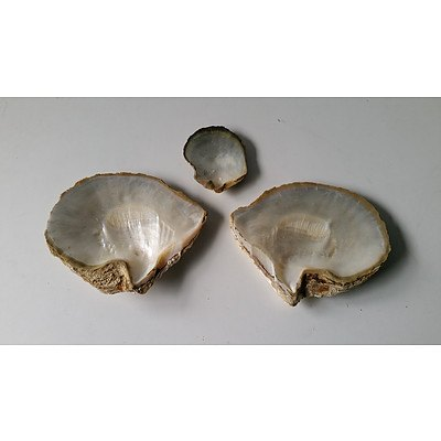 Three Mother of Pearl Shells