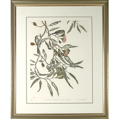 GRIFFITH, Pamela (b.1943) 'Black-Chinned Honeyeaters in the Gum Blossoms' Coloured Etching 35/60