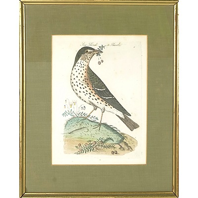 18th C Hand Coloured Engraving 'Song Thrush or Throstle' ,