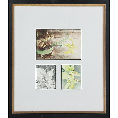 Group of Five Botanical Watercolours and Sketches Including Jan Loveday, Margaret Paice, Janet Hicks, Dianne Stockbridge and Helina Steele