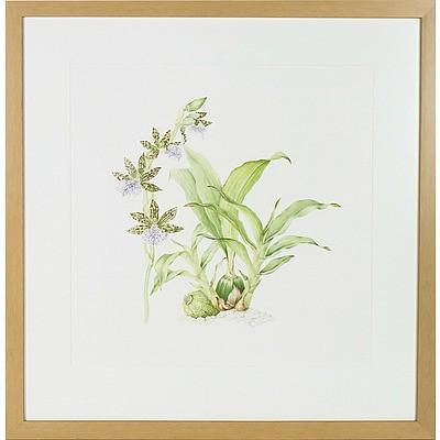 Joy Pearson Orchid Watercolour
