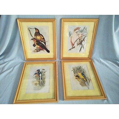 Set of 4 framed bird prints