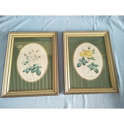 Set of 2 framed floral rose prints by Maureen Robers: Queen Elizabeth and All Gold