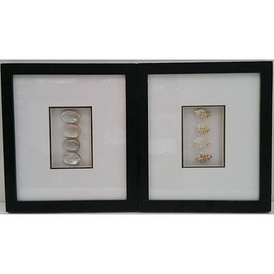 Framed Sea Shell Wall Hangings - Lot of Two
