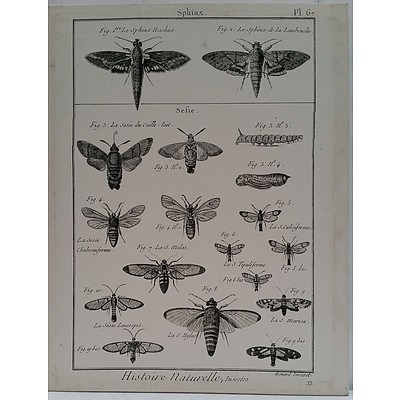 Histoire Naturelle Insects Stretched Canvas Print