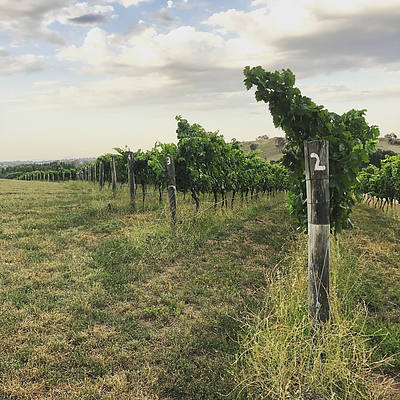 Poachers Pantry Vineyard and Lunch Experience for Six