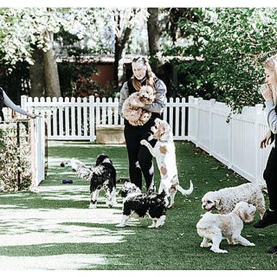 7 day dog stay at Tara Pet Boarding