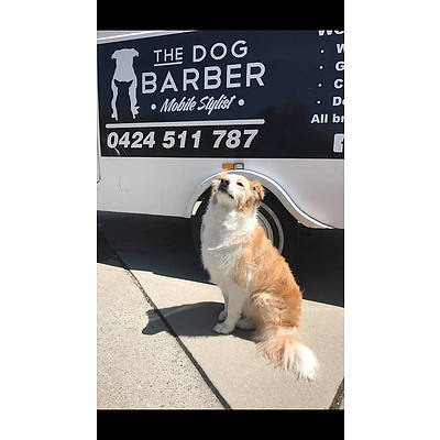 Dog Grooming up to $120
