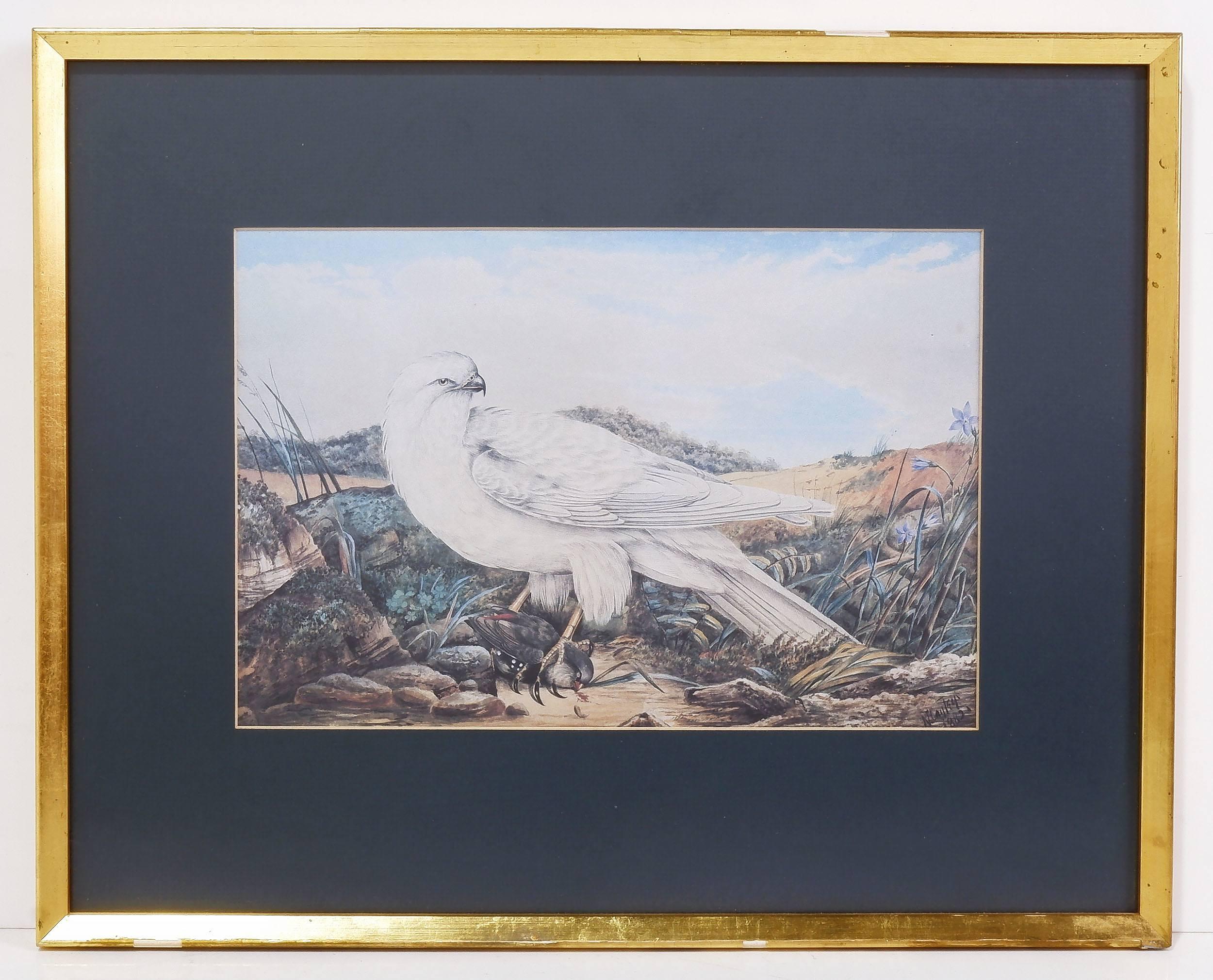 'Neville Cayley, Eagle Print 1882'