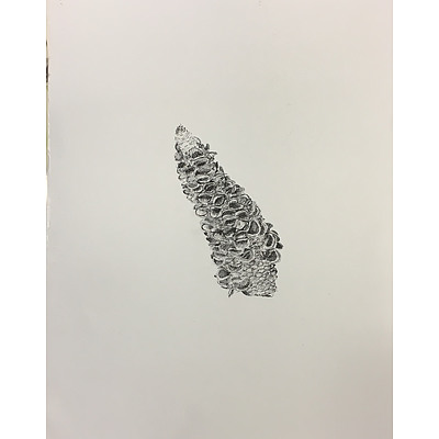 """Drawing: """"Banksia cone"""" by Michelle England"""