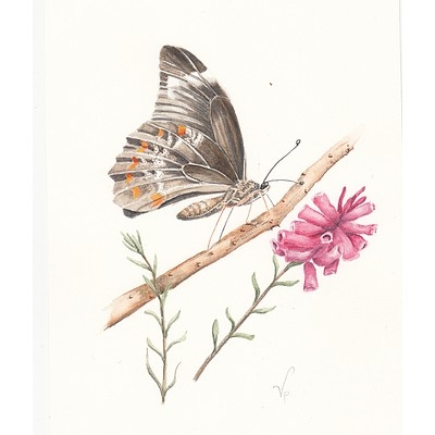 "Painting: ""Native butterfly watercolour"" by Vivien Pinder"