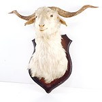 Mounted Taxidermy Goat Head