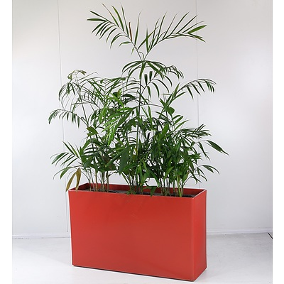 Red Three-Pot Plant Holder with Three Bamboo Palm Indoor Pot Plants