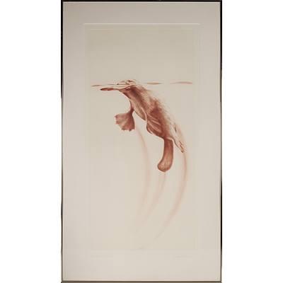 Peter Hickey (1942 -) Taronga Platypus 1984, Artist Proof Etching