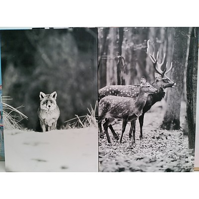 Stretched Canvas Fauna Prints - Lot of Two