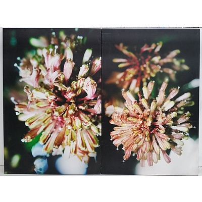 Stretched Canvas Floral Prints - Lot of Two