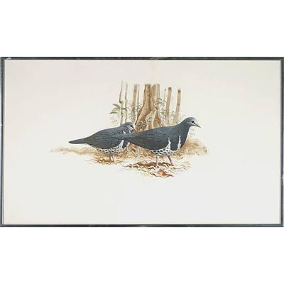 Frank Knight (1941-) Wonga Pigeons, Watercolour and Gouache