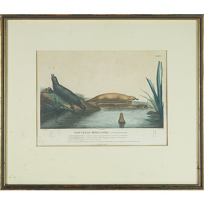 Charles Alexandre Lesueur (France Australia 1778-1846) Brown and Red Platypus, Hand Coloured Engraving