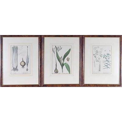 Three Antiquarian Botanical Engravings, Including Meadow and Saffron, Celery and Onion and More