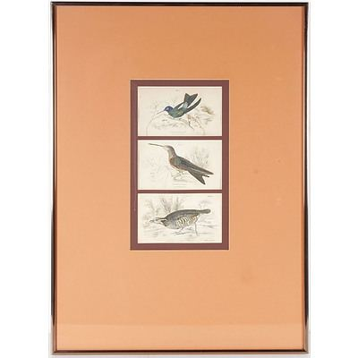 Print of Three Different Birds