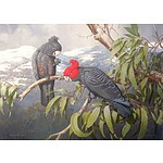 William T Cooper (1934- 2015) Gang Gang Cockatoos, Giclee Print, Limited Edition 18/50, Unframed