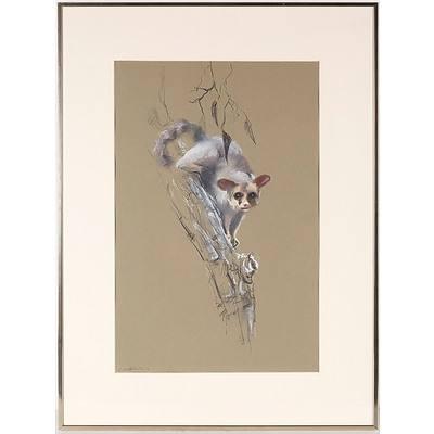 Marc Litchfield Possum I Graphite on Paper