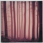 Stretched Canvas Forest Print