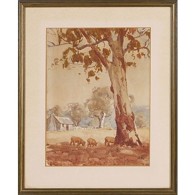 'Old Gum Tree, Sheep and Cottage' - JR, Watercolour