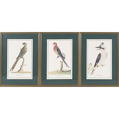 Set of Three Australian Ornithological Prints Including Laughing Jackass, Eastern Rosella and Ground Parrot After Watercolours From 1791