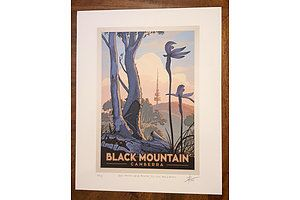 """Print: """"Black Mountain Nature Reserve, 1970-2020: Ants and orchids"""" by David Pope."""