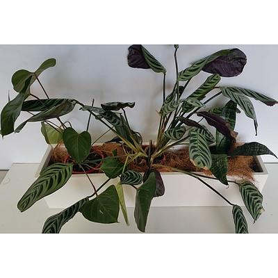Zebra Plants and Mother in Law's Tongue Desk/Benchtop Indoor Plants With Fiberglass Planter Trough
