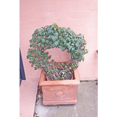 Pair of Terracotta Pots with Ivy Rings