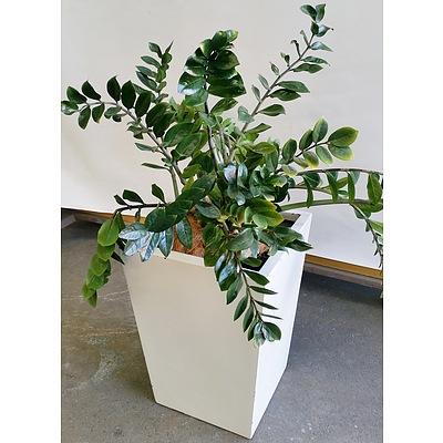 Zanzibar Gem(Zamioculus Zalmiofolia) Indoor Plant With Fiberglass Planter